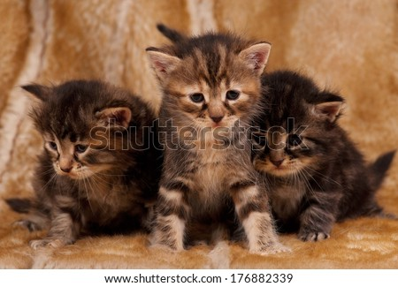 Cautious little kittens over dirty mustard color background - stock photo