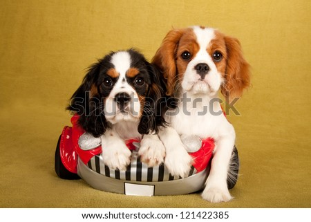 Cavalier King Charles Spaniel puppies sitting in soft toy car - stock photo