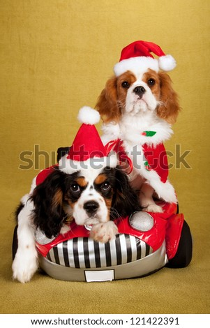 Cavalier King Charles Spaniel puppies with santa hats and jackets sitting in soft toy car