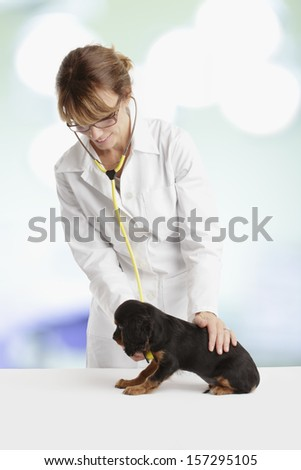 Cavalier King Charles Spaniel puppy in front of a veterinarian doctor