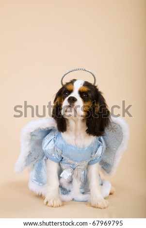 Cavalier puppy in blue Christmas angel outfit - stock photo