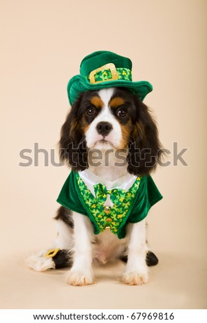 Cavalier puppy in St Patrick Day leprechaun outfit - stock photo