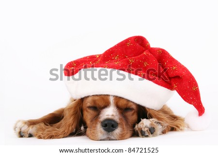 Cavalier puppy sleeping with christmas hat