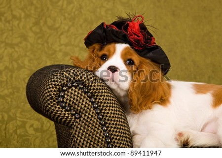 Cavalier puppy with hat on brown chair - stock photo