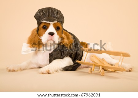 Cavalier puppy with pilot outfit and toy plane - stock photo