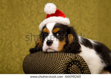 Cavalier puppy with Santa hat