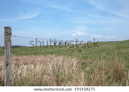 Caws on a hill far away and a fence in the foreground - stock photo
