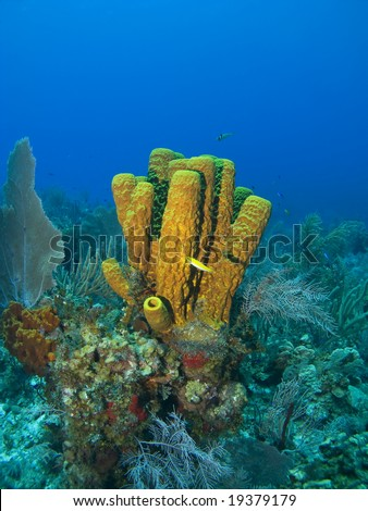 Cayman Island Tube Spongewith a Yellow Fish - stock photo