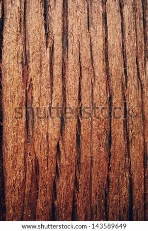 Cedar - stock photo