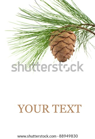 Cedar branch with cone on a white background - stock photo