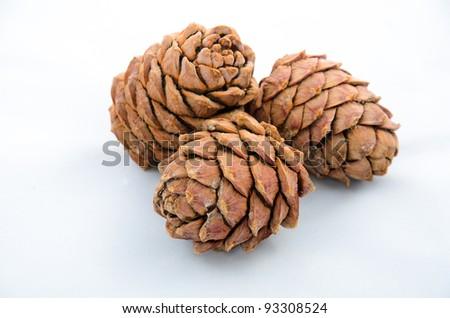 Cedar-cone - stock photo