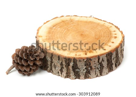 cedar cone and wood slice, isolated on white - stock photo