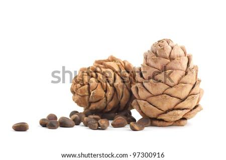 Cedar cones on a white background - stock photo