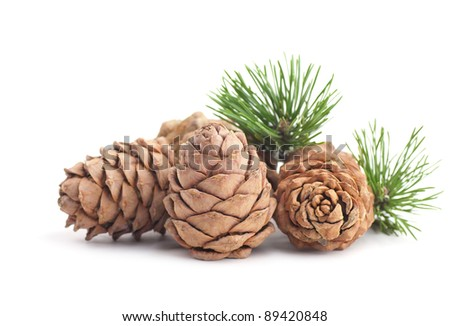 Cedar cones with branch on a white background - stock photo