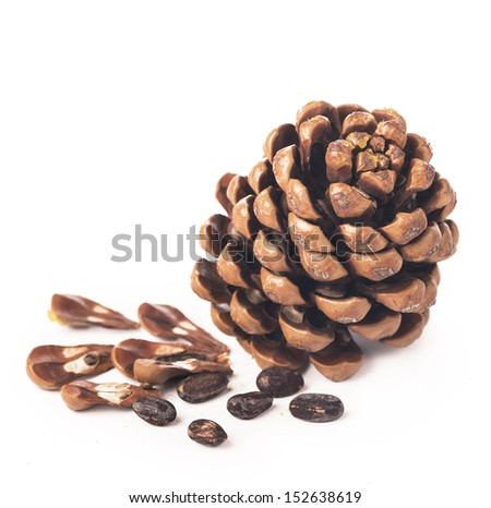 cedar cones with nuts on white background  - stock photo