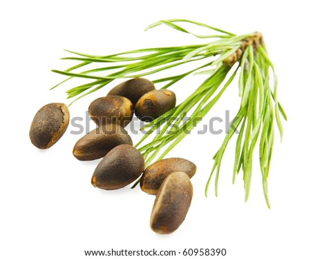 Cedar nuts with needles on white background