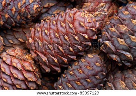 Cedar (or pine) cone background - stock photo