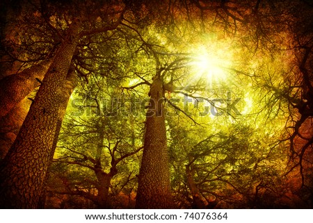 Cedar tree forest, rare Lebanese kind, grungy style photo - stock photo