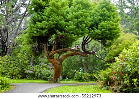 Cedar Tree in Park in Summer with Rhododendrons - stock photo