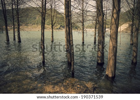 Cedar water in the river - stock photo