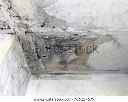 Ceiling Panels And Wall Damaged Hole In Roof Restroom From Drain Pipes  Leakage.Fungus Texture