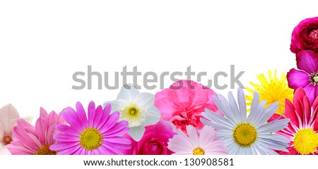 Celebrating flowers border on white background - stock photo