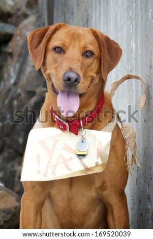 Celebratory Dog - stock photo