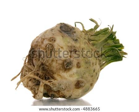 celery isolated over white background - stock photo
