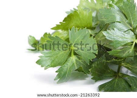 celery leaf on white