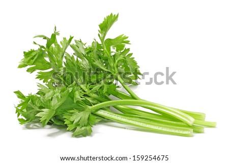 Celery on White Background  - stock photo