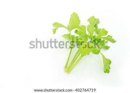 celery vegetable organic food healthy nature
