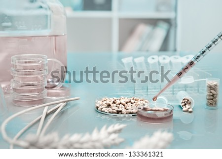Cell culture assay to test genetically modified wheat - stock photo