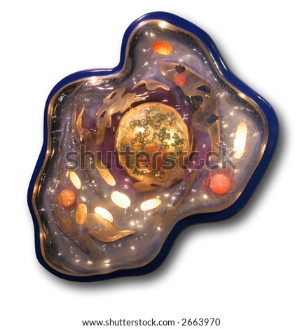 Cell showing organelles and nucleus - stock photo