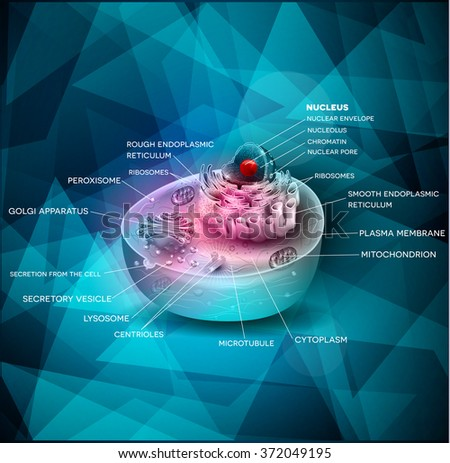Cell structure beautiful abstract design, cross section of the cell detailed colorful anatomy on a blue triangle shapes background - stock photo