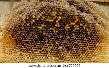 Cells in an old honeycomb. Natural pattern made by bees - stock photo