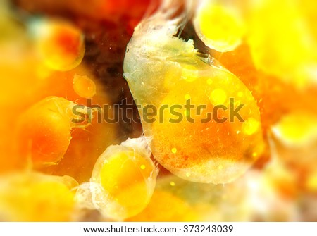 Cells through electron microscope - stock photo