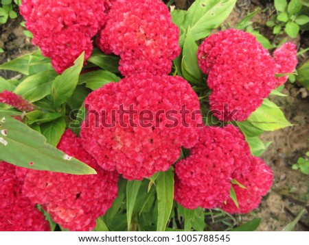 Flower Cock Stock Images, Royalty-Free Images & Vectors ...