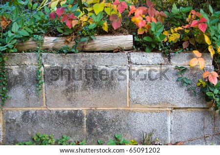 Cement brick background with ivy and vines. - stock photo