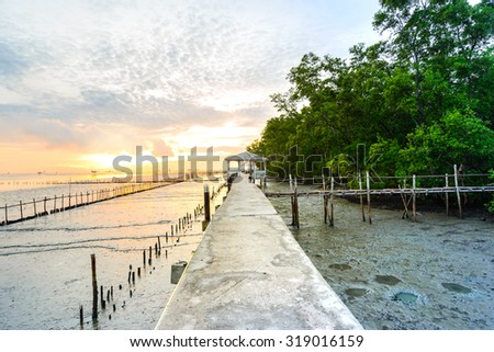 Cement walkway and pavilion nature trail mangrove forest. - stock photo