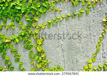 Cement wall and green leaf  background - stock photo