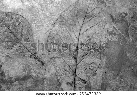 cement wall - texture  flower pattern design space interior gray background - stock photo