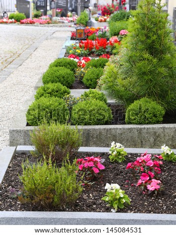 Cemetery alley background. - stock photo