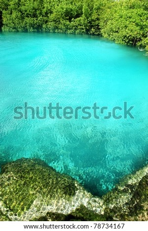 cenote mangrove clear turquoise water Mayan Riviera Mexico - stock photo