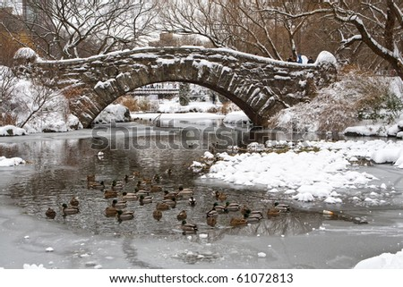 Central Park. Ducks in the river under the Gapstow Bridge