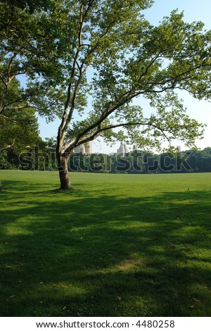 central park in new york on a warm summers day - stock photo