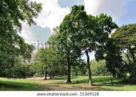 Central Park in the Summer - stock photo