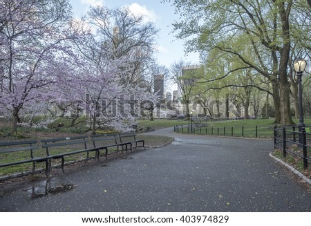 Central Park, New York City in early spring wet after rain - stock photo