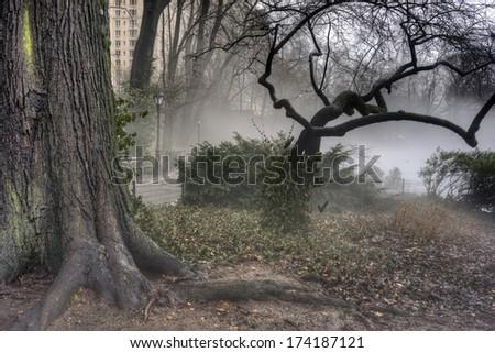 Central Park, New York City on a foggy day - stock photo