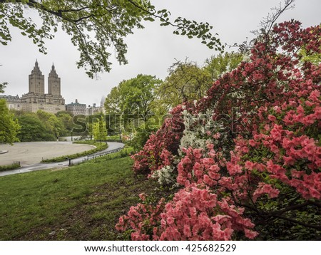Central Park, New York City park scene in early spring with red azelea - stock photo