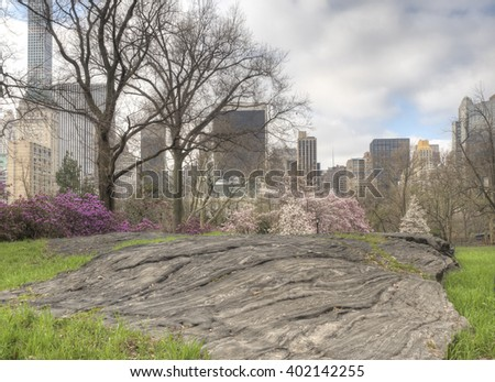 Central Park, New York City spring with cherry trees and azelea is bloom - stock photo